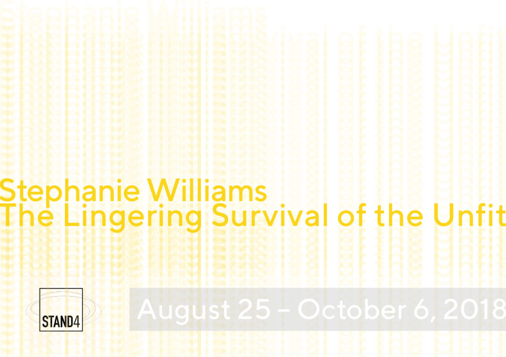 stephanie williams video installation